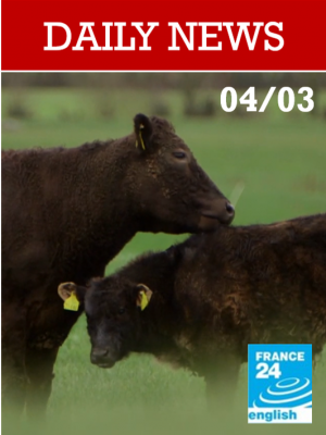 Brexit : les éleveurs irlandais sont menacés