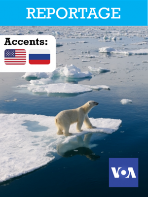Réchauffement climatique : les ours blancs en danger