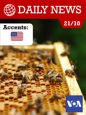 Pénurie mondiale de miel