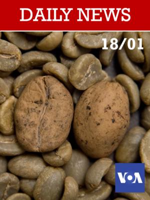 Plus de la moitié des variétés de café sauvage sont menacées d'extinction